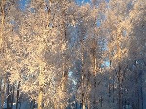 frosty alaska